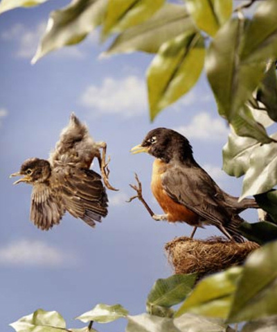baby-bird-leaving-nest-via-a-kick.jpg